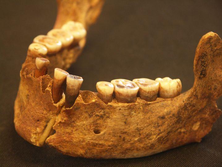 19.000 Jahre alter Kiefer aus Nordspanien