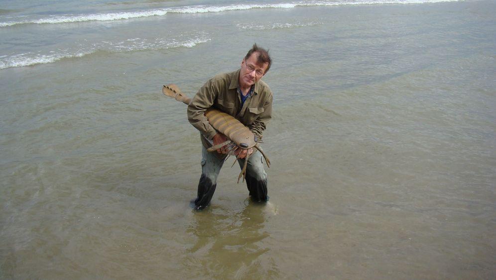 Seeskorpione: Fürchterliche Weichteil-Jäger