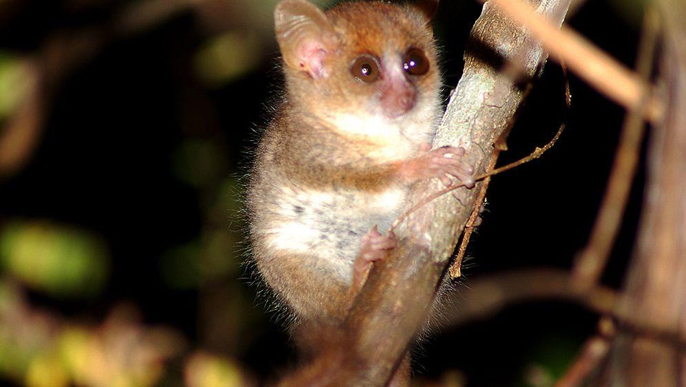Madagaskar: Naturparadies in Gefahr