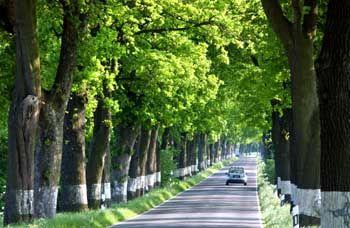 Links sind Bäume, rechts sind Bäume, und dazwischen Zwischenräume: Mecklenburg