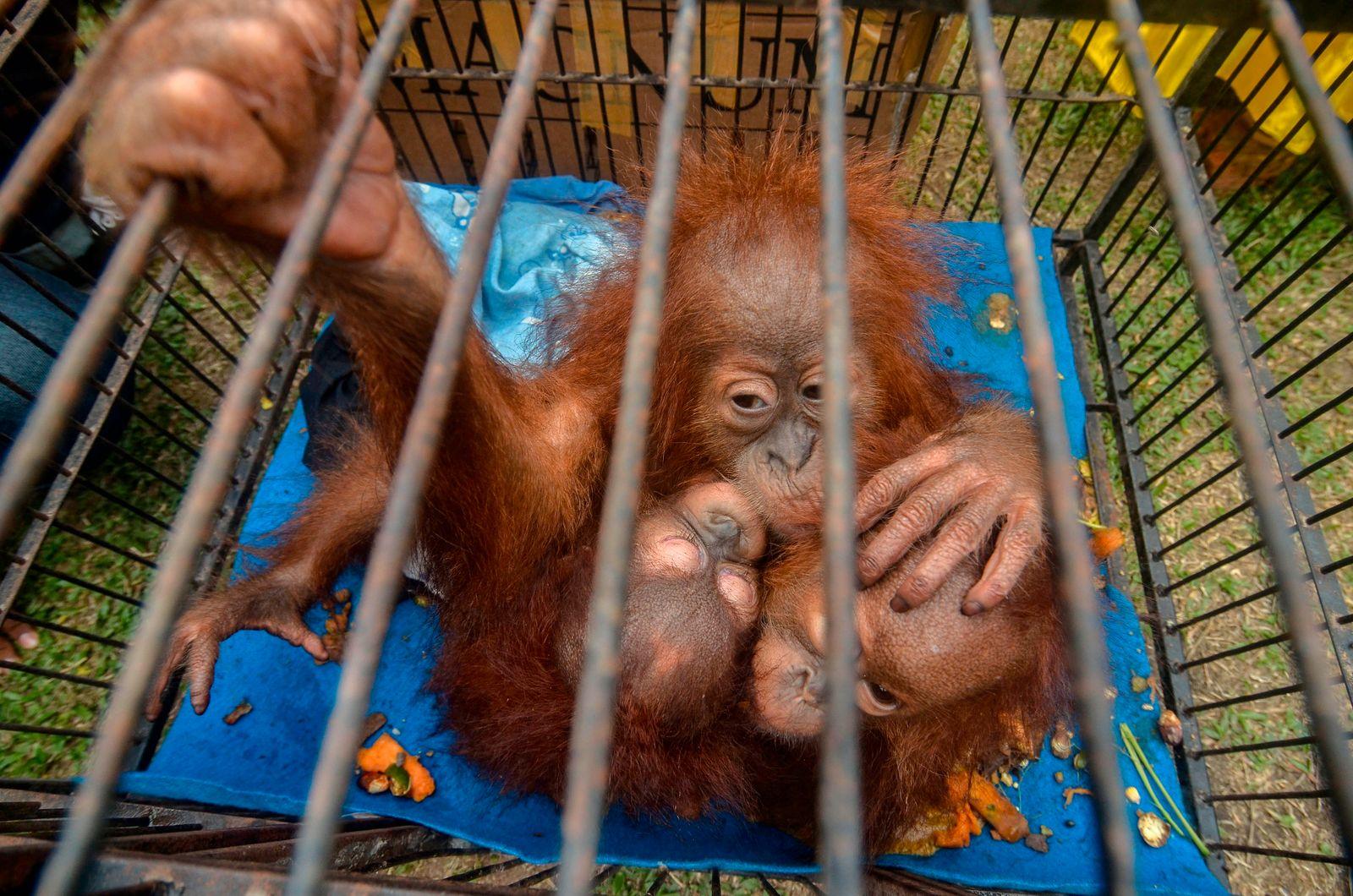 INDONESIA-ANIMAL