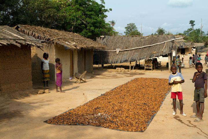 Nachdem Kinder und Erwachsene die Früchte von den Bäumen geholt haben, wird der Kakao auf einer Plane getrocknet