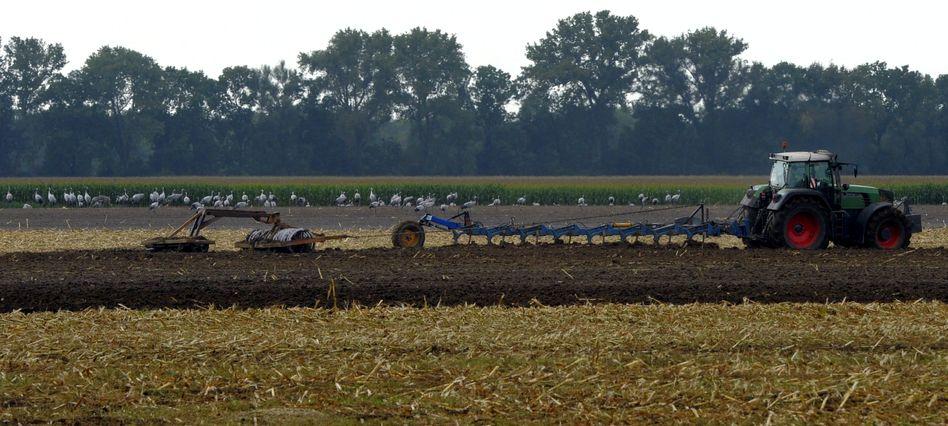 "Landwirtschaft: ""EU-Agrarpolitik vereinfachen"""