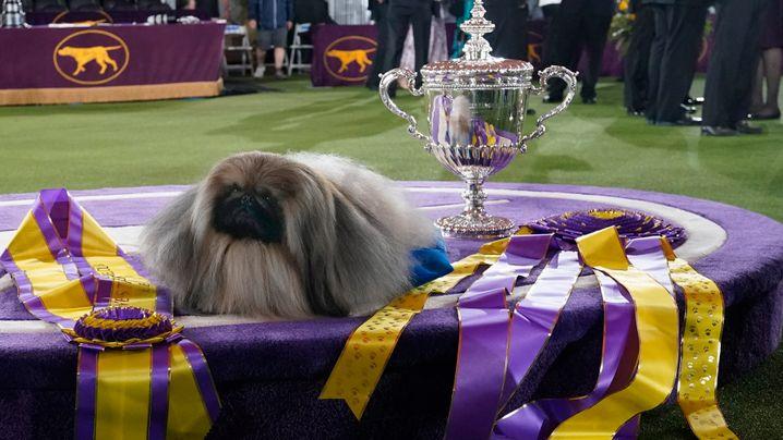 Auf den Hund gekommen: Bilder vom Wettbewerb