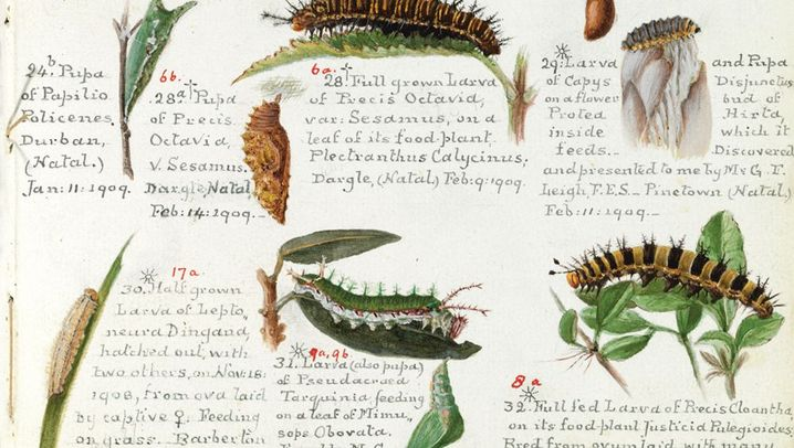 Dokumente berühmter Forscher: Skizzen, Tagebücher, Karten