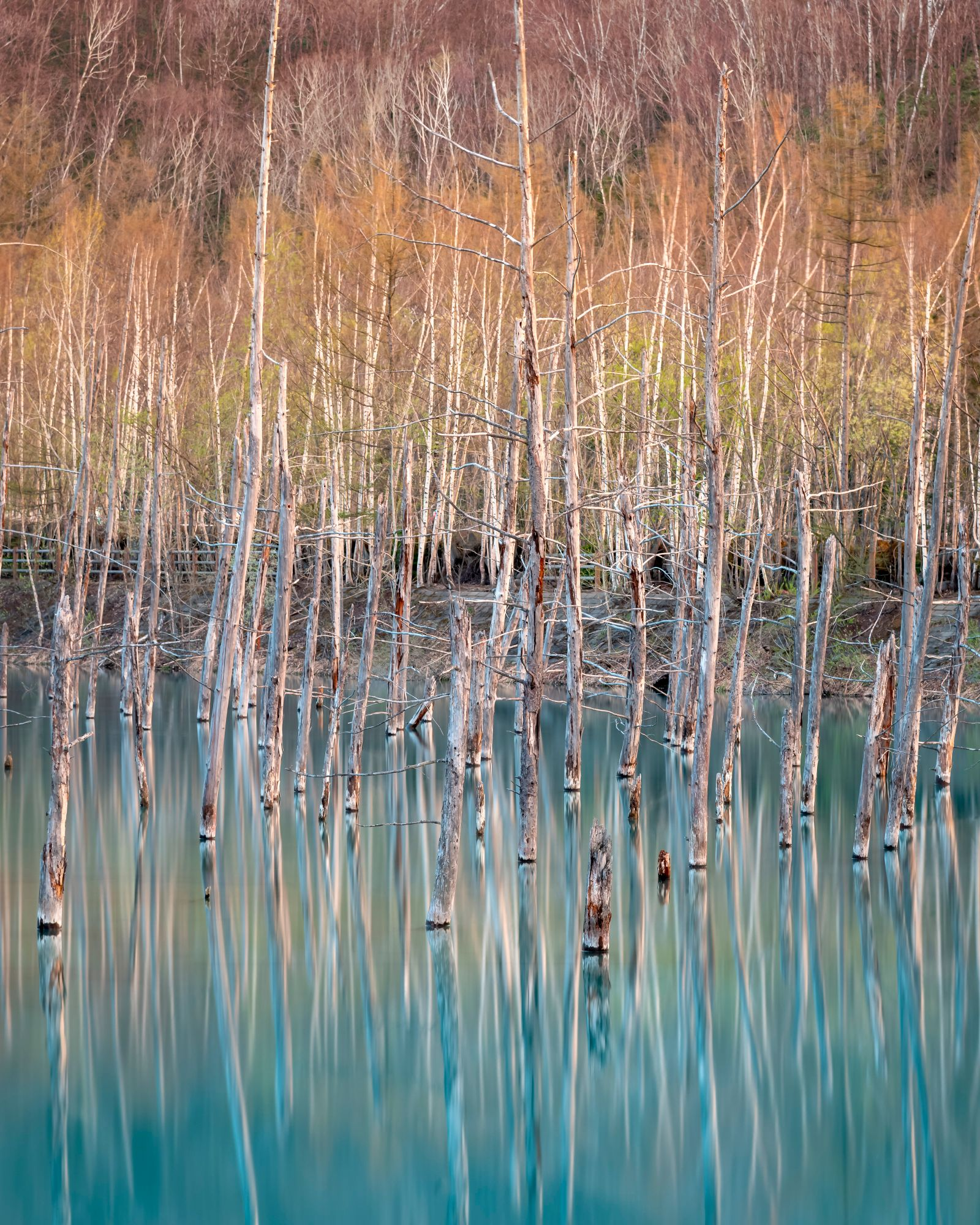 The International Landscape Photographer of the Year/ Top 101