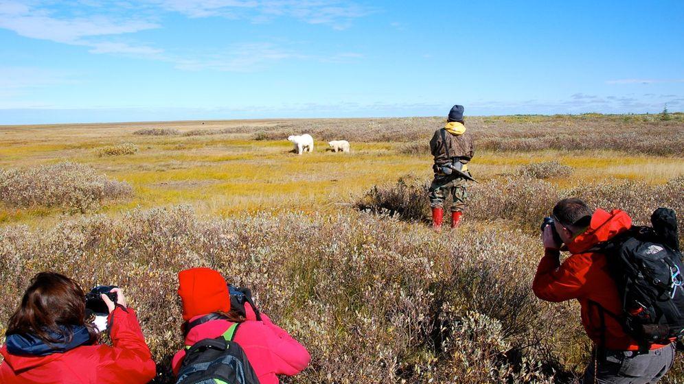 Eisbären-Spotting in Kanada: Weiße Riesen der Tundra