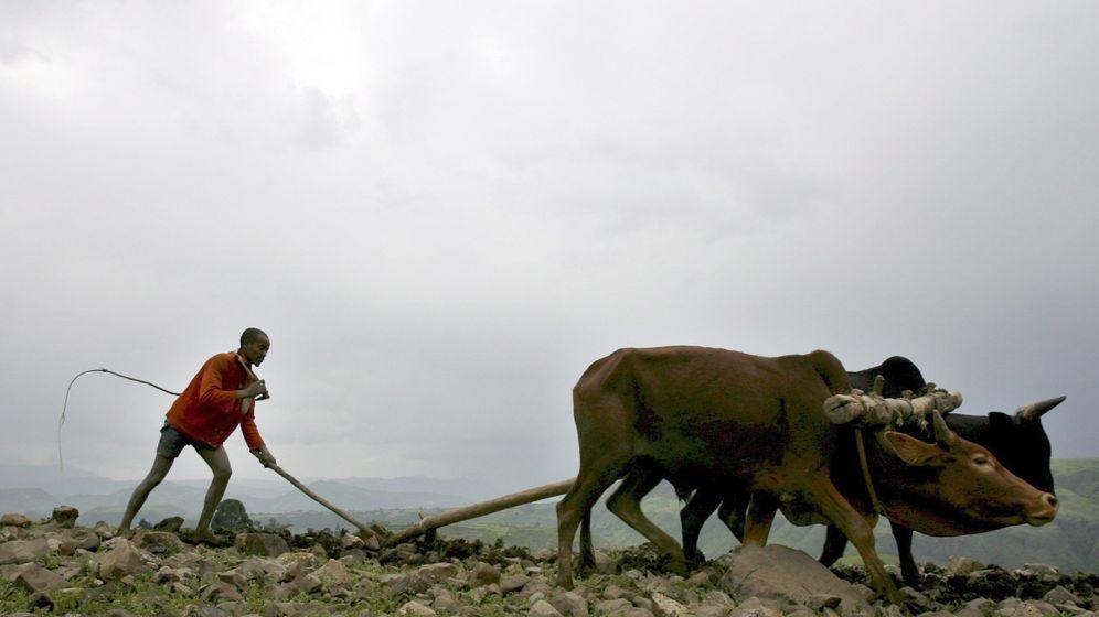 IPCC-Bericht: Nahrungsnot wird durch Klimawandel verschärft