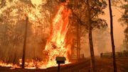 Die ökologische Katastrophe