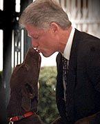 Beste Freunde: Mensch und Hund