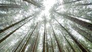 Förster warnen vor nächstem Waldsterben