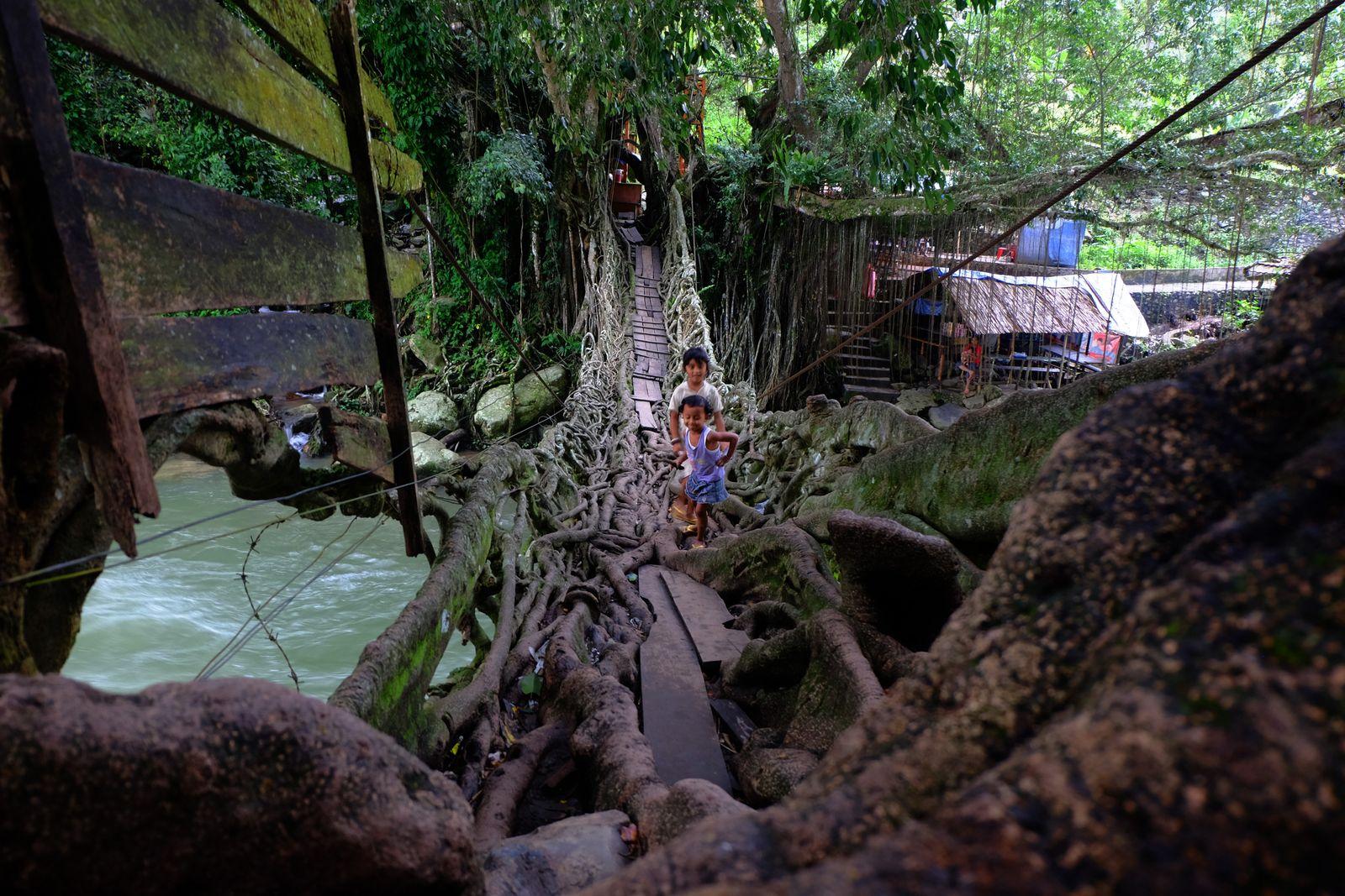 The Root Bridge In West Sumatra, Indonesia