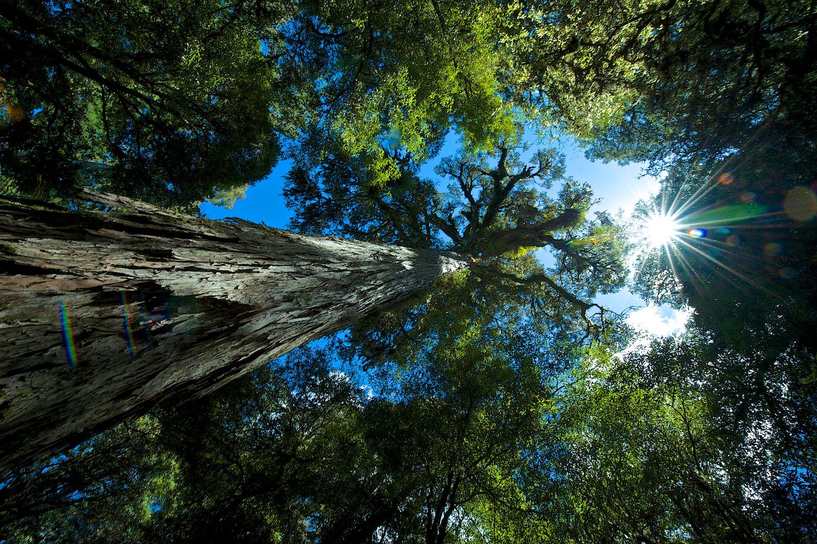 NZ_Te Urewera Rainforest Treks 649