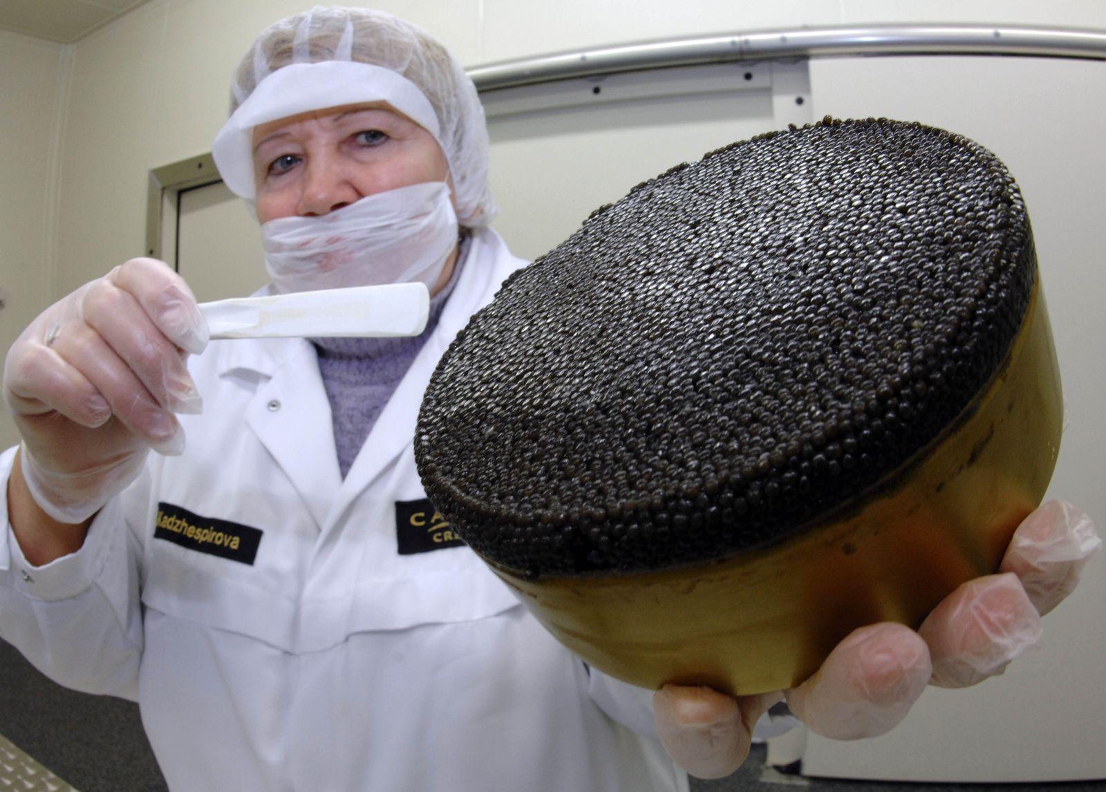 Störzuchtanlage Caviar Creator
