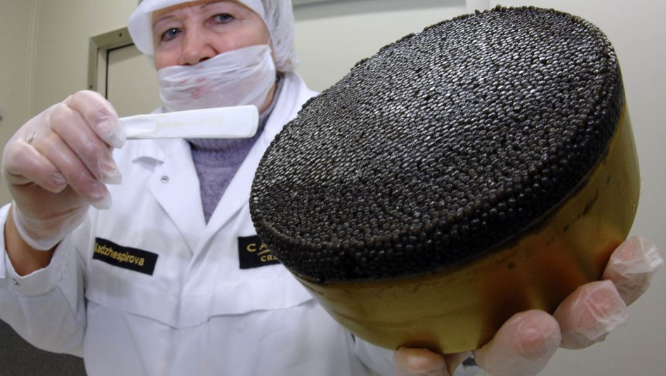 Kaviar-Dose von Caviar Creator: Insolvenz angemeldet