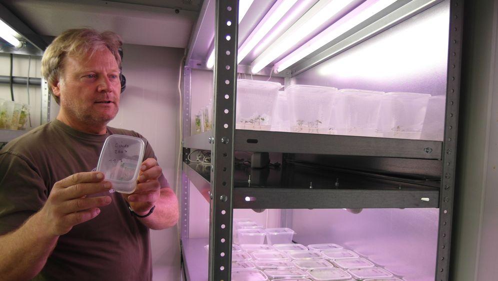 Bio-Landwirtschaft: Der Retter der Kartoffel Linda