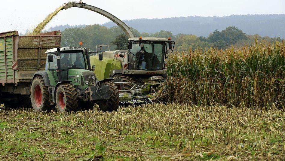 Maisernte: In Deutschland gelangt weiter zu viel Nitrat ins Grundwasser