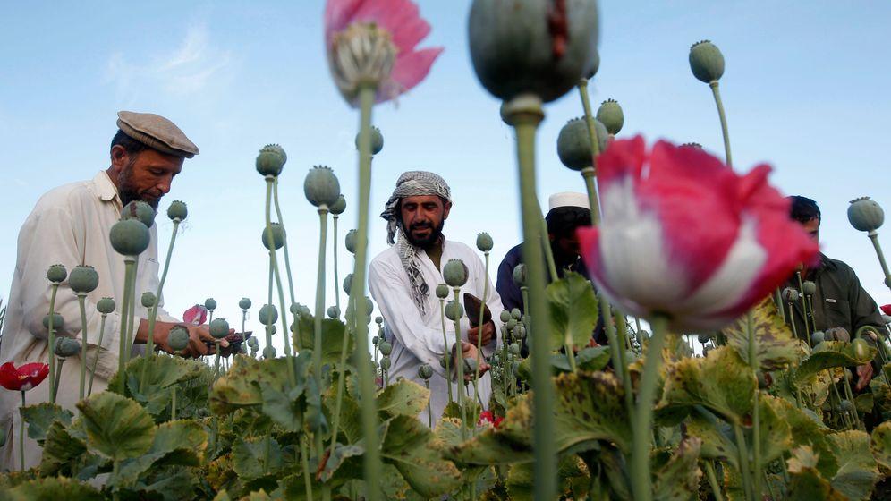 Afghanistan: Der Opium-Boom