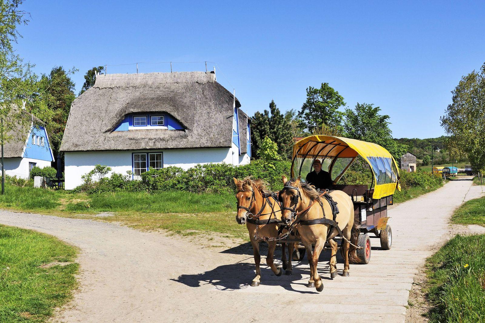 EINMALIGE VERWENDUNG Hiddensee Pferdekutsche