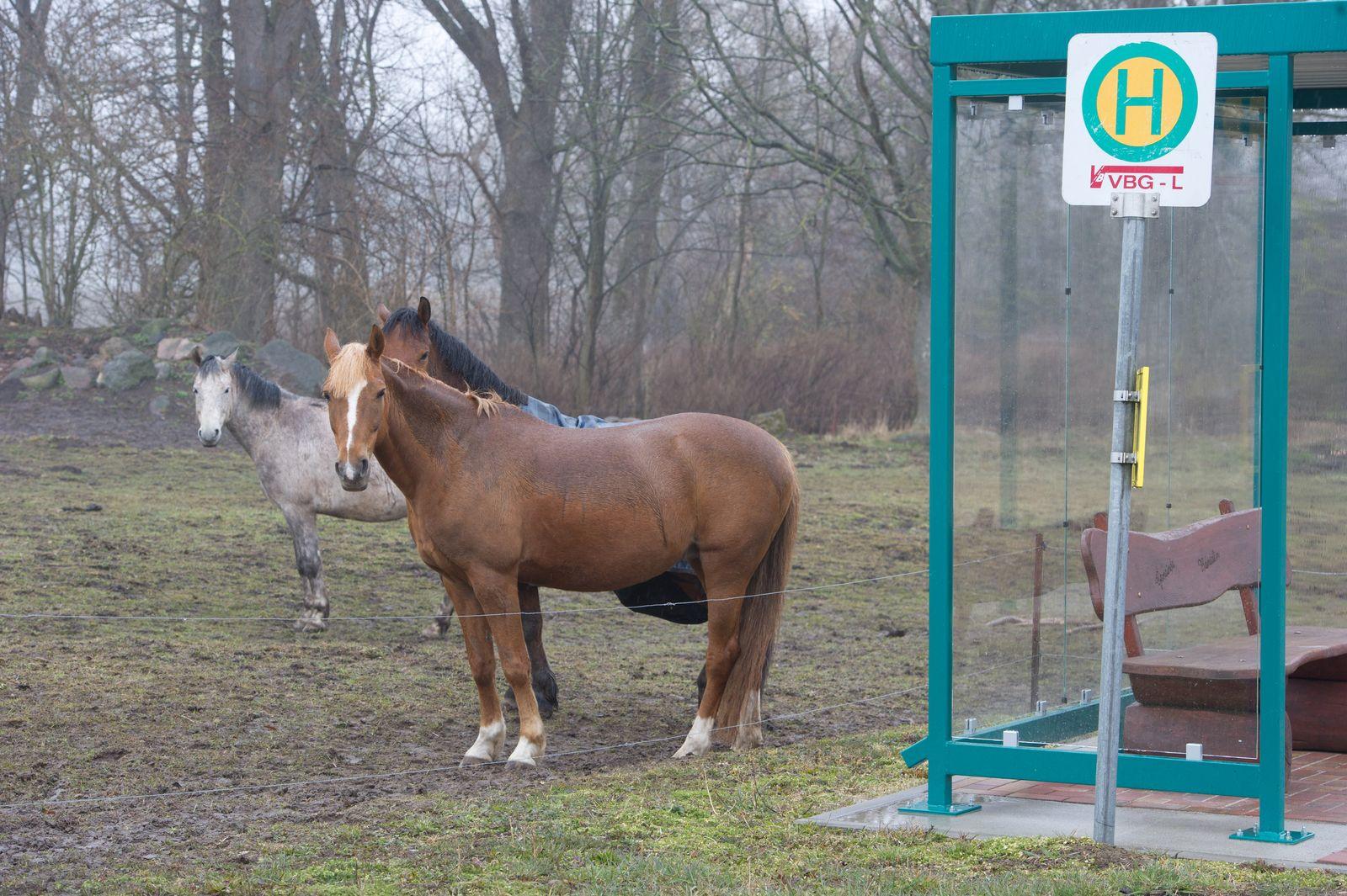 Pferde an Bushaltestelle