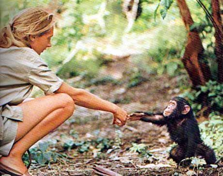 Die ersten Jahre in Gombe: Jane Goodall (fotografiert von ihrem ersten Ehemann)