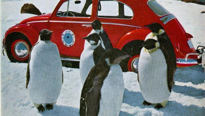 Unter Pinguinen: Werbeikone auf Eis