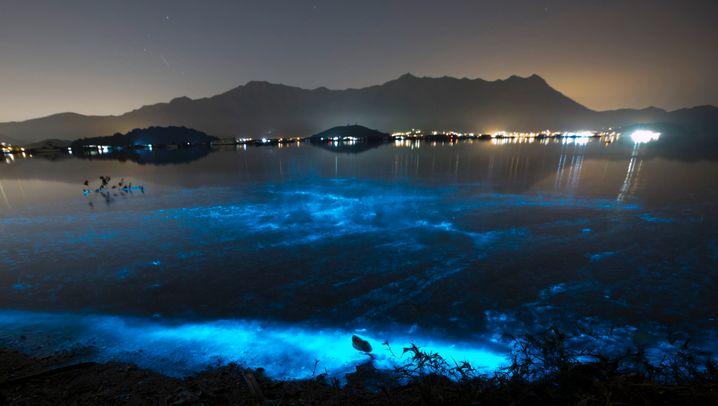 Biolumineszenz: Verborgenes zum Leuchten bringen