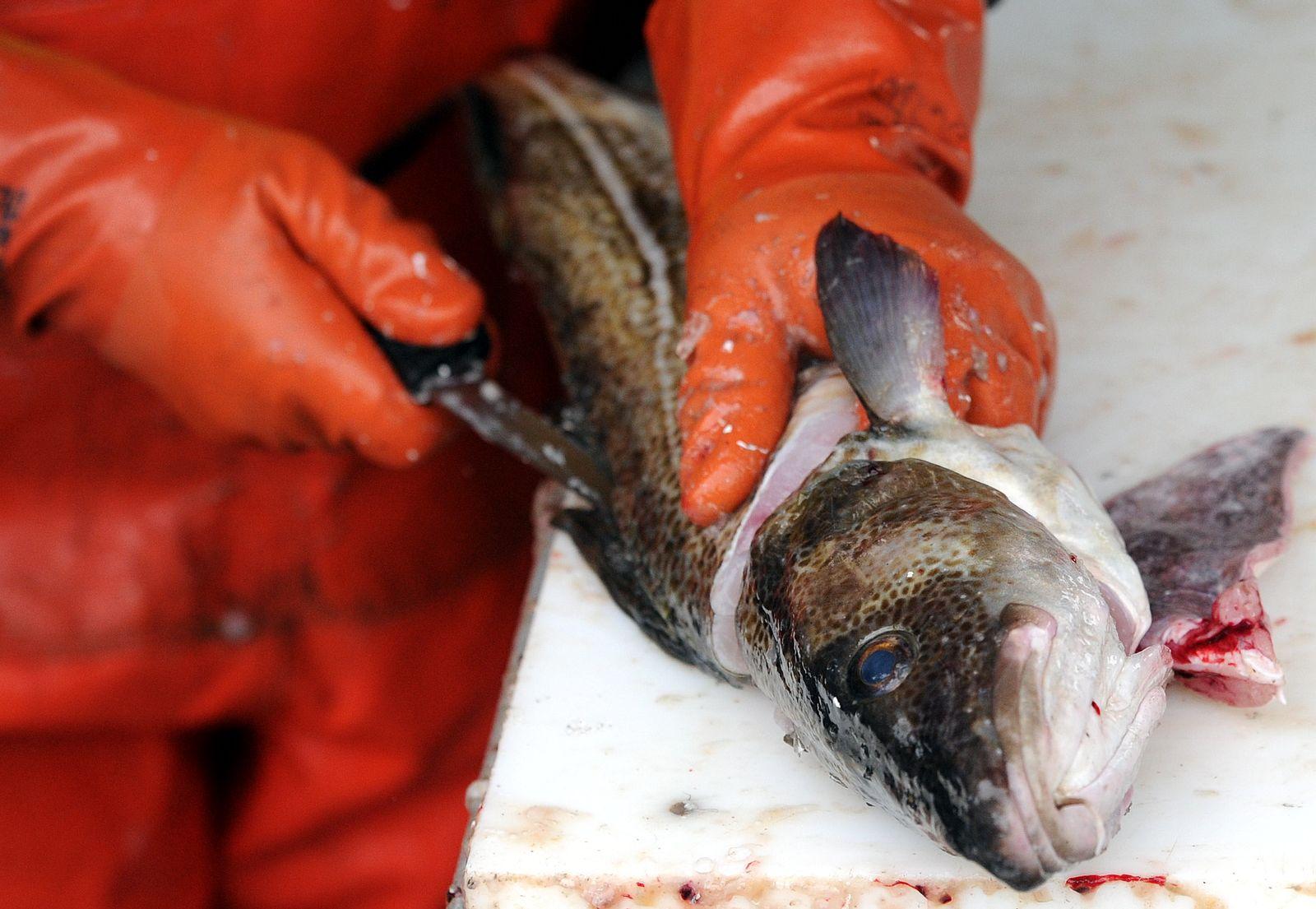 NICHT VERWENDEN Fischereireform/Europa/