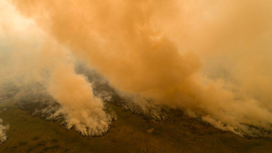 Mächtige Rauchsäulen ziehen über den Bundesstaat Mato Grosso