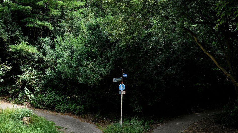 Fünf Kinder und Jugendliche sollen in diesem Waldstück in Mülheim an der Ruhr eine Frau vergewaltigt haben.