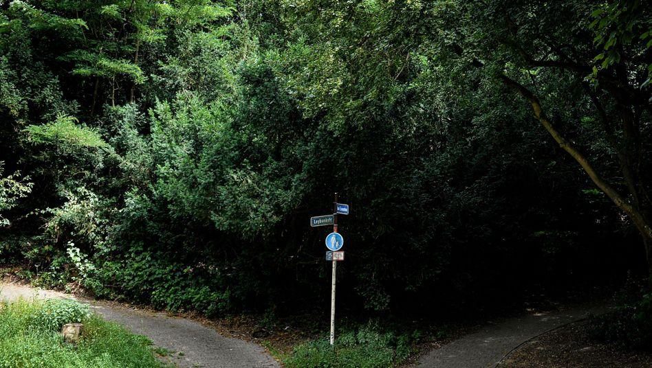 Fünf Kinder und Jugendliche sollen in diesem Waldstück in Mülheim an der Ruhr eine Frau vergewaltigt haben