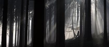Wald am Feldberg (Taunus): Auch deutscher Wald gefährdet