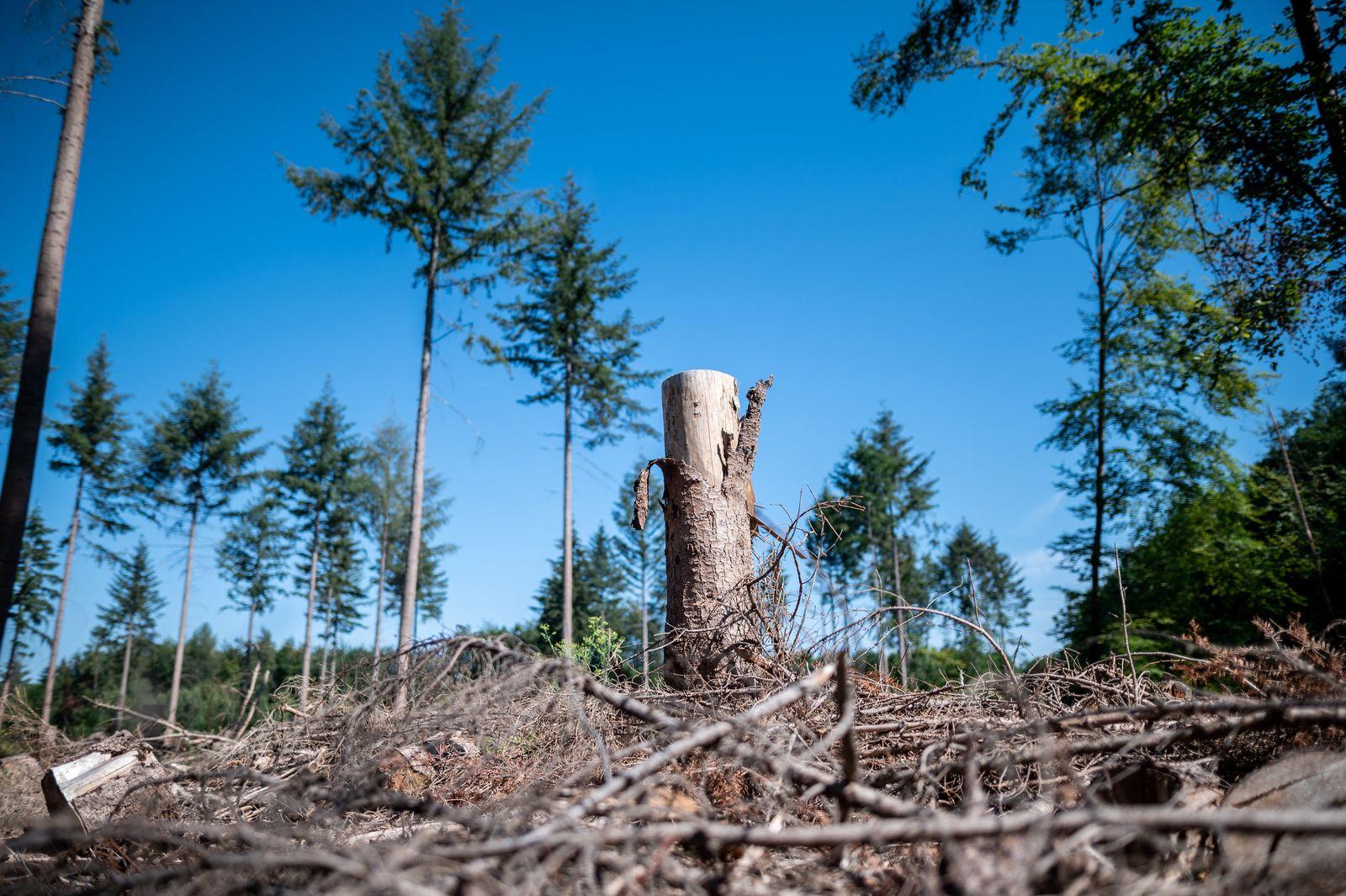 Nordrhein-Westfalen stockt Hilfe für Wald- und Holzwirtschaft auf