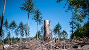 Der deutsche Wald stirbt