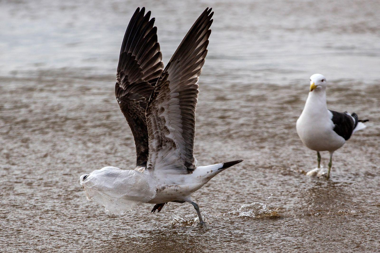 Vogel/ Plastik