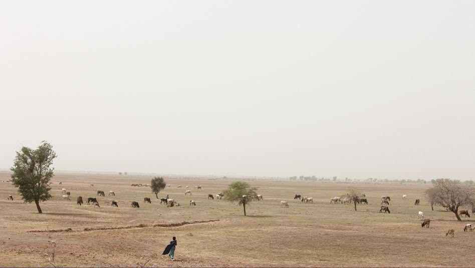 Region in Mali: Dürren auf dem Vormarsch