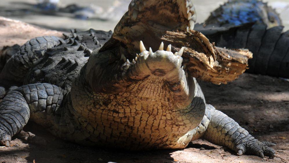 Honduras: Hunger auf der Krokodilfarm