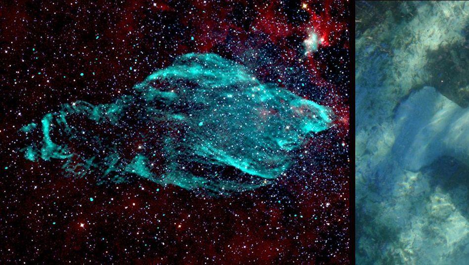Explosionswolke im Sternbild Adler (Aquila): Ähnlichkeit mit Seekuh