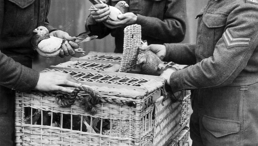 Verschlüsselte Nachricht: Rätselhafte Tauben-Botschaft