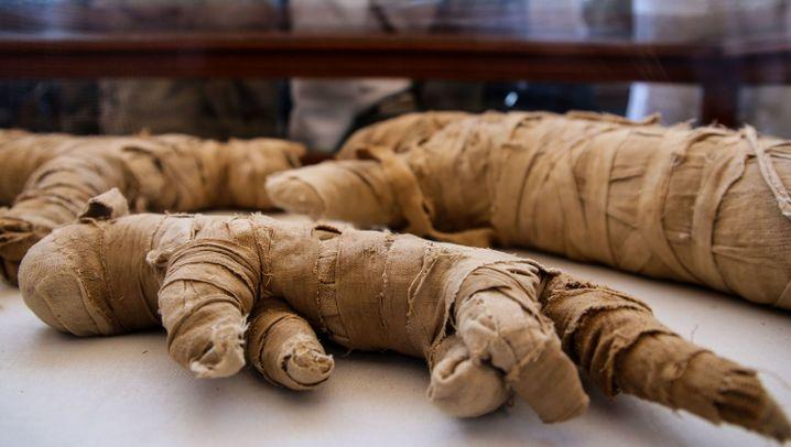 Totenstadt Sakkara: Außergewöhnlicher Fund in Grabkammer