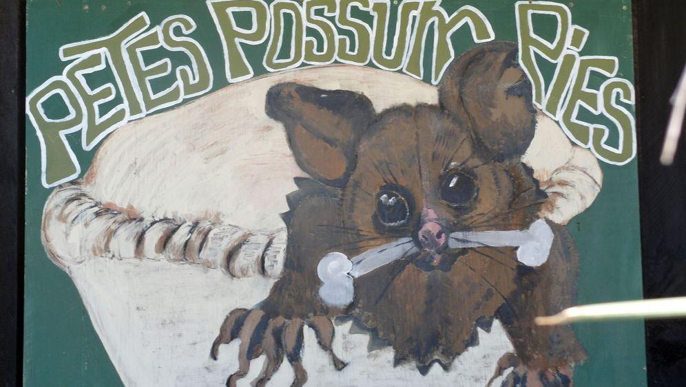 Possum-Pie aus Neuseeland: Staatsfeind im Schlafrock