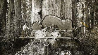 Holzrausch in Kalifornien