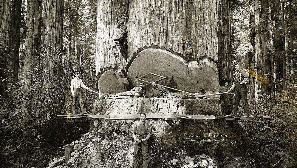 Historische Fotografien: Holzrausch in Kalifornien