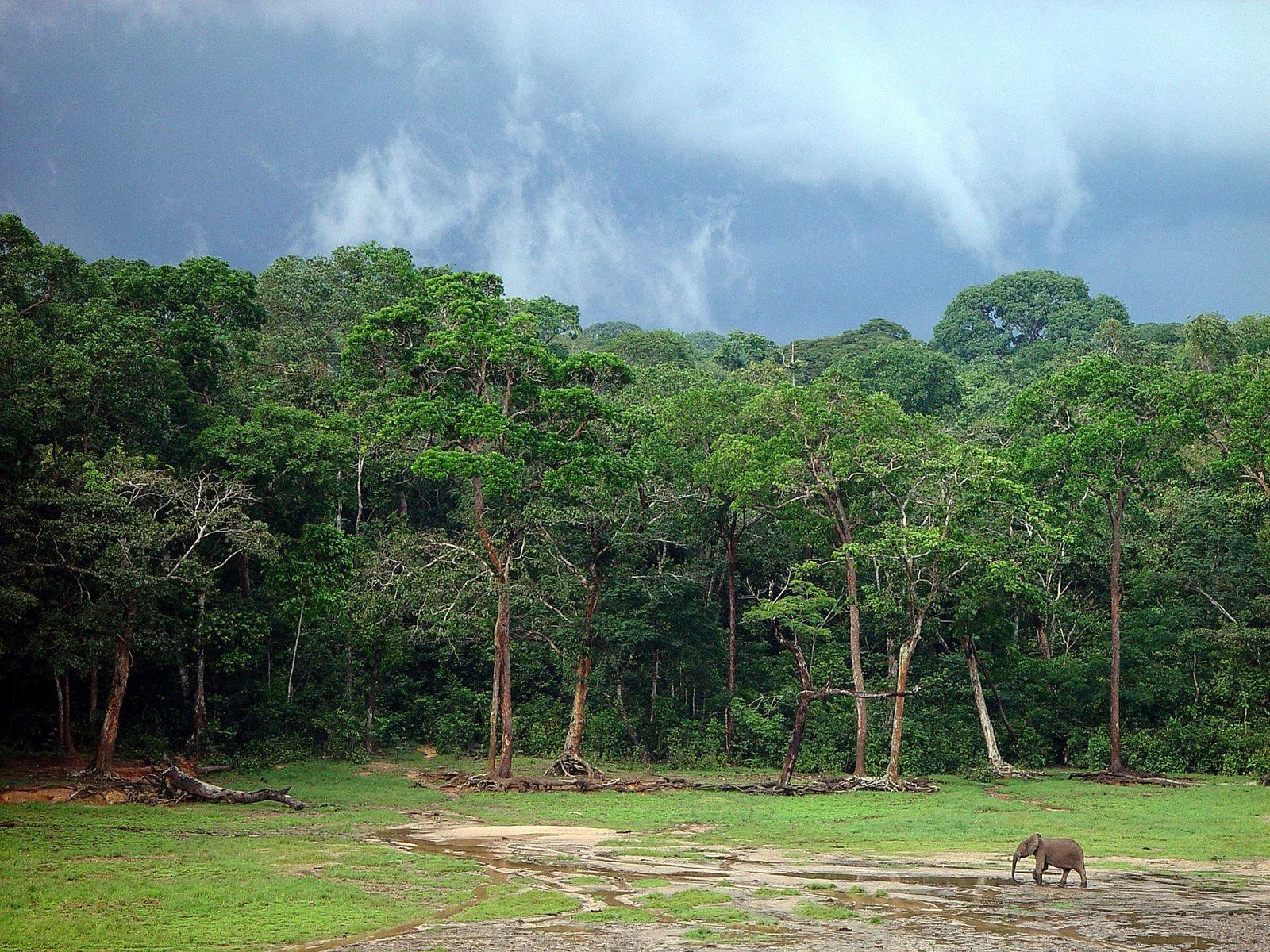 Artenvielfalt / UN-Weltrat
