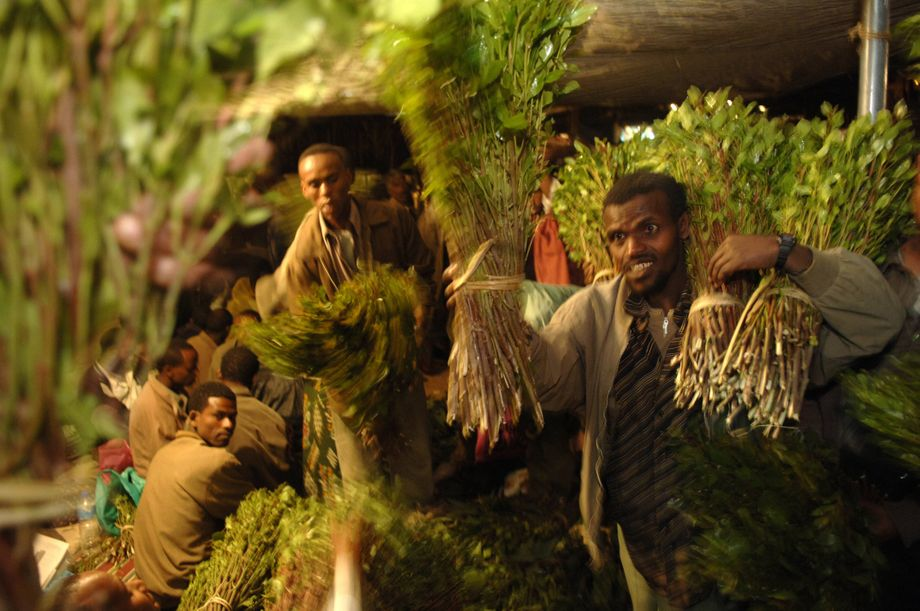 Khat farmers selling their harvest: Consumption of the plant is probably most comparable to chewing coca leaves. After a few hours, however, the stimulating effect often gives way to a deep inertia.