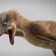 Extrem kleine Saurierart entdeckt
