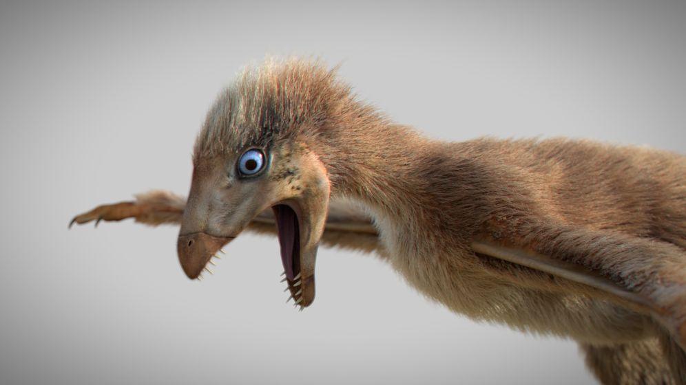 Seltsamer Fossilfund: Ambopteryx, der Fledermausvogel-Saurier