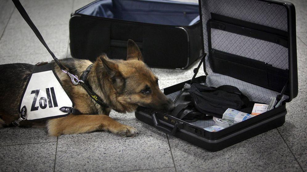 Bargeldspürhund am Flughafen: Riech mal!