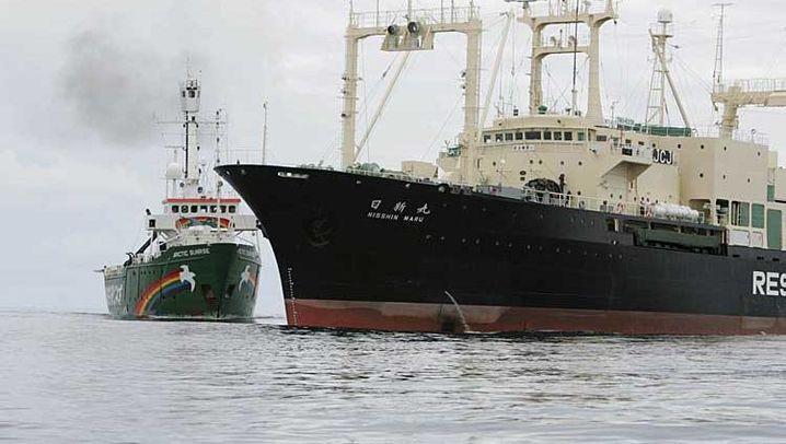 Walfang: Greenpeace-Schiff kollidiert mit Walfänger