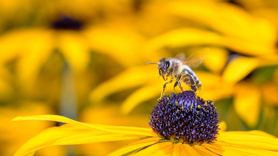 In verschiedenen Ökosystemen kommt Insekten eine tragende Rolle zu